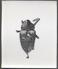 Unusual Vintage Photo Beetle Bug Scientific Specimen Entomology 258114