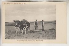 VINTAGE POSTCARD - HOLLAND-AMERICA LINE - HARROWING WITH OXEN IN THE NETHERLANDS