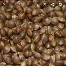 2x Seeds Cannabis Marihuana Seed Hemp Samen Sativa Hanf THC Kush Weed Haze