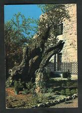 Posted from Jerusalem with Jordan Stamp: C1960s: Garden of Gethsemane