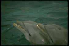 448057 Dolphin Twins Seaquarium A4 Photo Print
