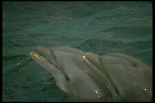 448057 Dolphin Twins Seaquarium A4 Photo Print