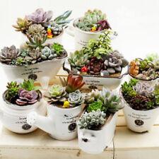 Plant Succulents Living Stones Plants  400pcs Mixed Succulent Seeds Cactus Home