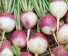 Turnip- Purple Top- 100 Seeds - 50 % off sale