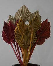 Palmspear Rot Orange Natur Dekorieren Trockenblume Gestecke Bodenvasen Floristik