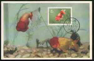 PRC. 509. S38-4. 4f. Goldfish. Stamp on Postcard with First Day Postmarked 1960