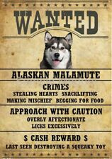 Alaskan Malamute Wanted 