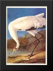 Whooping Crane 15x21 Black Wood Framed Art Print by John James Audubon