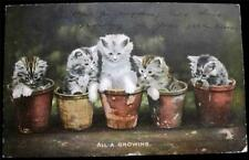 "OLD POSTCARD OF CATS / KITTENS ""ALL A GROWING"" USED 1906"