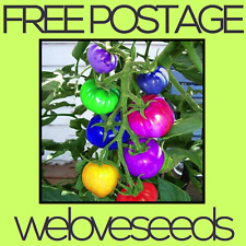 LOCAL AUSSIE STOCK - Rainbow Tomato, Vegetable Fruit Seeds ~20x FREE SHIPPING
