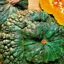 Winter Squash Marina Di Chioggia  5 seeds  - Vegetable