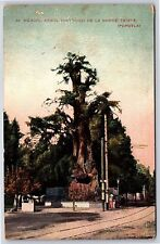 Arbol Historico De La Noche triste Popotla, Mexico Divided Back Postcard Unused