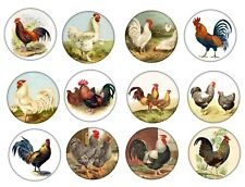 Vintage Farm Country Kitchen Chickens Rooster Cabinet Drawer Knobs Set of 12