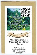 Abies concolor glauca - Blaue Coloradotanne - trockenheits-resistent (10+ Samen)