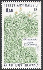 FSAT/TAAF  1990 Buttercup/Flowers/Plants/Nature/Environment 1v (n22895)