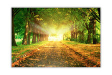 MAJESTIC ROAD TREES AUTUMN CANVAS PRINTS WALL DECO PICTURES ART POSTERS IMAGES