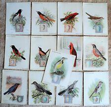 1898 - 1900 Antique 13 AMERICAN SINGER BIRD Cards Advertising SEWING MACHINES