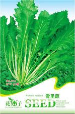 50 Original Pack Seeds Potherb Mustard Seeds Salted Vegetable Organic C111