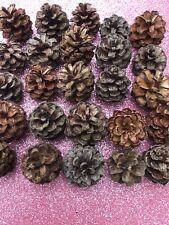 X25 Scots Mini Baby Pine Cones Crafts Wedding Christmas Pot Pourri 2-2,5cm baked