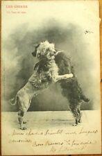 Dogs Dancing the Waltz - 1903 French Fantasy Postcard: Les Chiens, Tour de Valse