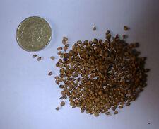 Southern Red Cedar, Juniper Virginiania Silicicola, Evergreen 25 Seeds