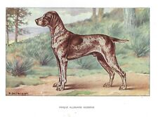 1930 Art Castellan France Dog Watercolor Print German Shorthaired Pointer