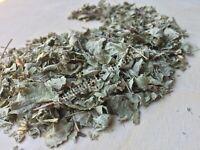 Dream Herb (Mexican), Calea Zacatechichi, BULK, Leaf ~ From Schmerbals Herbals