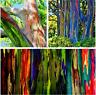 100 PCS Seeds Rare Rainbow Eucalyptus Deglupta Bonsai Tropical Tree Plants 2019