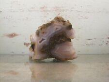New listing Petrified Limb Cast Natural Solid Agate Fossil 1lbs 4oz {X1516Ef}