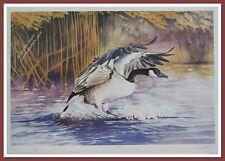 Canada Goose by Robert Pow