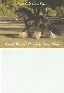 """Horse   """"BB King """"   Gypsy Vanner Stallion"""