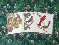 Bird Prints to Frame GORGEOUS Bird Prints from a 1950s Book Set of 3