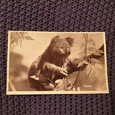Koala - Vintage Postcard