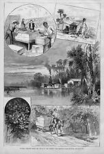 FLORIDA ORANGES FROM GROVE TO MARKET PACKING SHIPPING 1880 ORANGE GROVE TRAMWAY