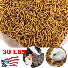 Dried Mealworms for chickens 30lbs - Chicken Treats Duck Feed Organic Meal Worms