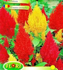 CELOSIA ARGENTEA - DWARF - 440 HIGH QUALITY FLOWER SEEDS /1215