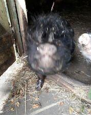 Aus Tierheilpraxis - 6 Kräuter - Wurmkur für Schafe, Ziegen, Minischweine