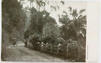 .SUPERB EARLY 1900'S BULLI PASS, NSW UNUSED POSTCARD