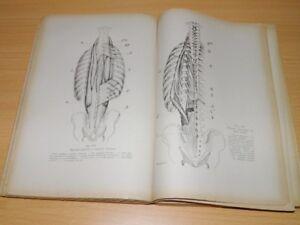 LATARJET Manuel Anatomie Education Physique Kinésithérapie Médecin GRAVURES 1949