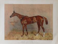 1876 Antique HORSE Print EMBLEM STEEPLECHASE MARE - Chromolithograph
