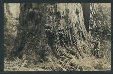 CA near Orick RPPC c.1930 THE BIG TREE on REDWOOD HIGHWAY by Patterson No.890