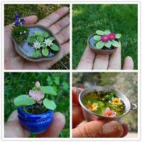 Mini Lotus Bonsai Seeds Plants Mini Water Lily Flores Flower Hydroponic 2pcs
