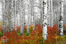 """Aaron Reed """"Echoes Of Fall"""" #/100 Fine Art Photographic Print w/COA"""