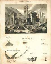 1802  Ruins Of Persepolis Pheaton Or Tropic Bird Copperplate