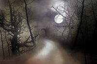 """perfect oil painting handpainted on canvas """"Misty Moonlit Night""""N3869"""