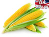 SEEDS EXTRA SWEET CORN SWEETCORN SWIFT F1 20 FINEST SEEDS -Easy to Grow Kernals