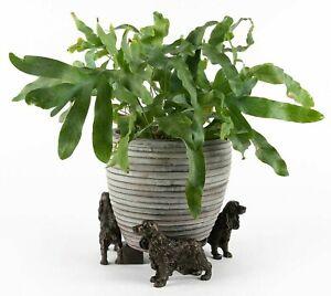 Potty Feet - Set of 3 Cocker Spaniel Dog Flower Pot Feet / Stand Bronze Colour