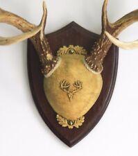 Dark Oak Ultimate Antler Mounting Kit for Deer - The Taxidermists' Woodshop