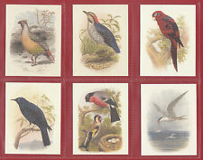 GDS  CARDS  -  SET  OF  L 25  BIRDS  BY  CASSELL  ( 1860 )  CARDS  -  2007