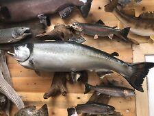 Lake Trout Salmon Taxidermy Fish Cabin Decor
